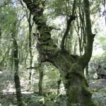bosco del sasseto 2