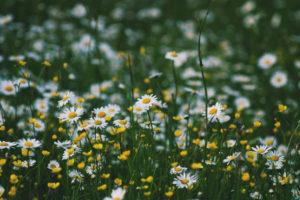 Percorso selvatico, corso riconoscimento piante spontanee